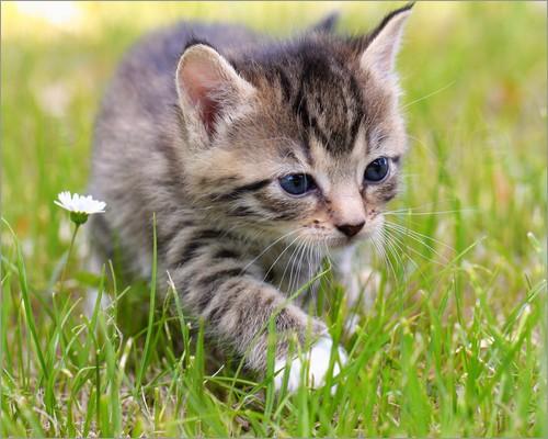 20g Asvet Spezial, 12 Kräuter bis 40 Katzen z EINMALGABE, keine chem. Wurmkur