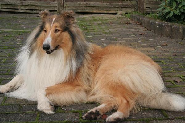 20g Asvet Spezial, 12 Kräuter f. bis 20 Hunde, EINMALGABE keine chem. Wurmkur