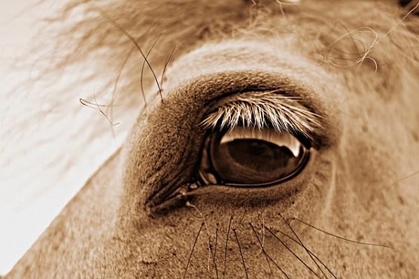 eye-1594321_640